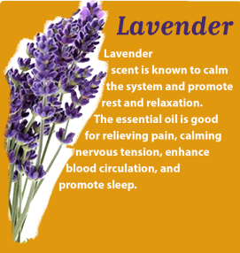 lavender-block-about-essential-oil